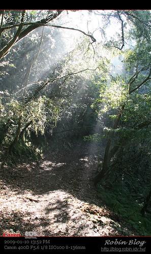 你拍攝的 20090110數位攝影_拉拉山外拍494.jpg。