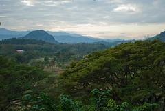 Chiang View
