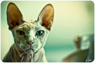 What a cat.