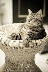 (Sherwin_andante) Tags: home cat 2009 toro 貓 200901 43le k10d bestofcats 龍二
