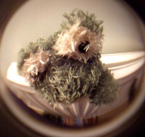 Wooly frog 31Jan09