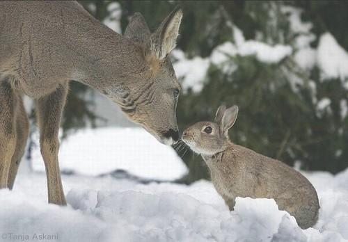 Bambi & Thumper RL