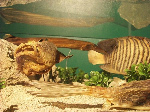 An Aquarium In Mactan - My Cebu Photo Blog