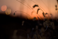 relax (ecphotographic) Tags: plants grass warmweather 50mmf14d notdeep emchill