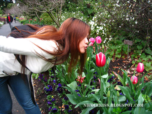 kissing a tulip