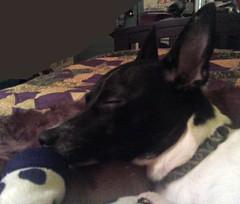 Jetta sleeping