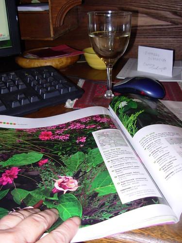 garden 2009 026