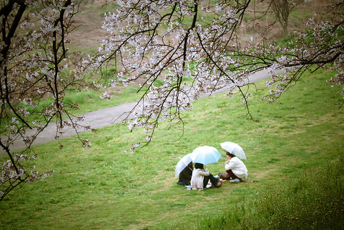 13429 : Sakura2009 #21 -Secret Talk-
