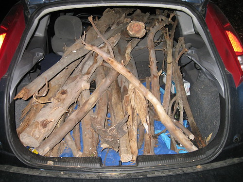 2000 Ford Focus hatchback filled with Eucalyptus logs and branches