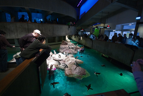 Feeding the Penguins - NEAQ