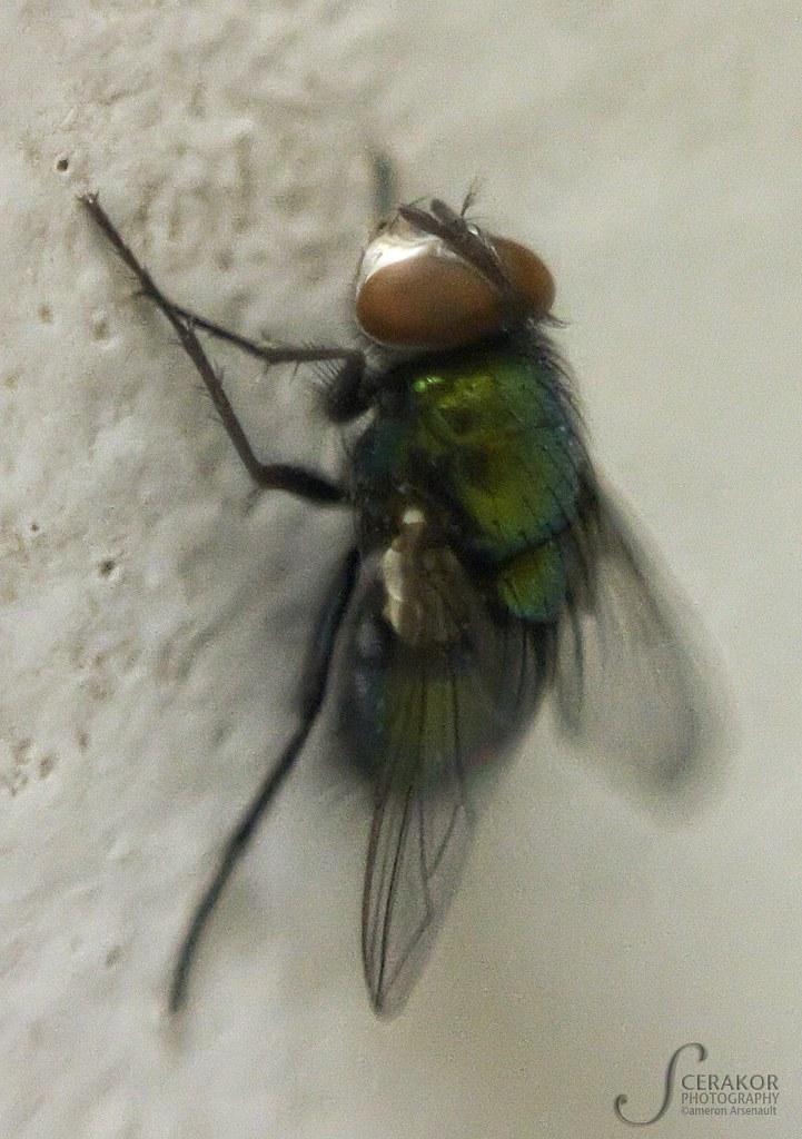 fly2w