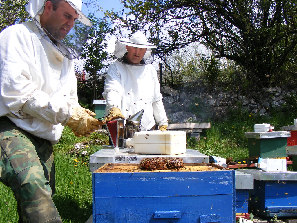 Bees Spring cleaning (7)