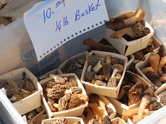 Morels for sale at the Mountain Mushroom Festival in Irvine, Kentucky