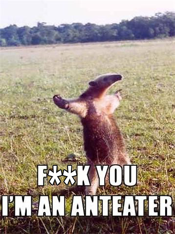 Can We Please Get Some More Anteater?