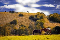 Pasture (*monz*) Tags: blue trees sky horse cloud color colour green grass animals countryside farm pasture dslr shrubs 200mm f28l monz 5dmk2
