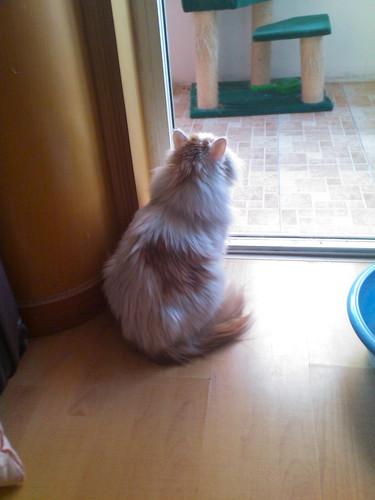 Fuwa sitting