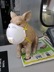 Beware of the Swine Flu (Arizona SnowLeopard) Tags: pig funny mask first safety parody swine sick hog flu h1n1 hummor