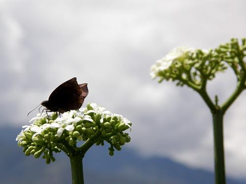 163.Mariposa