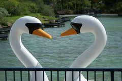 Animal Attractions... (davy_alpha_male) Tags: swans