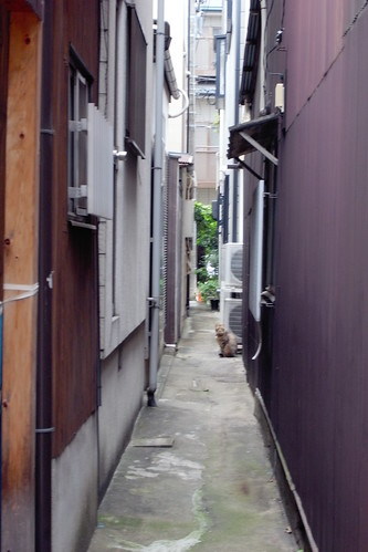 Today's Cat@20090530