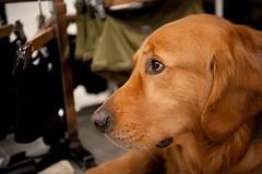 (Penelope's Loom) Tags: sanfrancisco dog nikon sad hayesvalley 2470mm28 d700