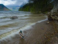 _IGP5754-Edit-2 (srsteelphotos) Tags: lakes lakedistrict cumbria ullswater northwestengland