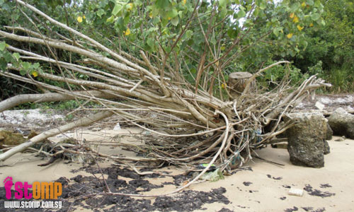More trees will be destroyed by waves hitting shoreline