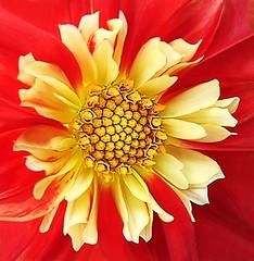 There is Beauty All Around (Jenn (ovaunda)) Tags: yellow sony dsch5 jennovaunda ovaunda