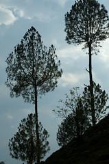 ADS_000001940 (dickysingh) Tags: travel india outdoor aditya himalayas singh dicky uttarakhand adityasingh ranthamborebagh theranthambhorebagh wwwranthambhorecom