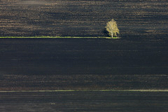 Lonesome (Aerial Photography) Tags: tree field by landscape bayern landwirtschaft feld aerial nd birch agriculture landschaft baum deu birke luftbild luftaufnahme obb deutschlandgermany laubbaum kulturlandschaft ackerbau agrarlandschaft fotoklausleidorfwwwleidorfde 23042010 1ds42097 knigsmoos knigsmooslkrneuburgschrobe knigsmooslkrneuburgschrobenhausen