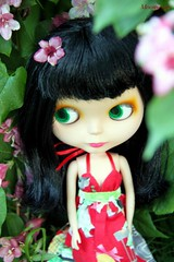 Bettie Mae in blooms