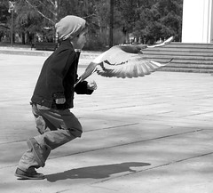 Race ! (Go 4 IT) Tags: birds nikon action outdoor pigeons 365 blackandwhitegroup flickraward flickrbronzeaward heartawards flckrhearts goldstaraward flickrestrellas beautifulshot nikonflickraward nikonflickraward flickrbronzeawardgroup goldstarawardlevel3 goldstarawardlevel2 d3100 blinkagainforinterestingimages nikonafs1685mmf3556gedvrdx evghenitirulnic