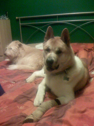 Taji with bandage, and Berkeley
