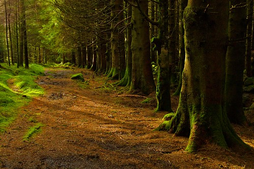 Forest above Crafnant by erwlas, on Flickr