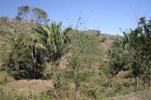 Dry and tropical vegetation south of Cartagena - Colombia.