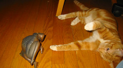 cat throwing up