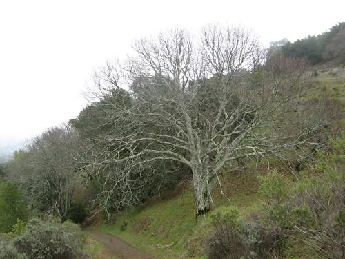 Del Amigo Trail