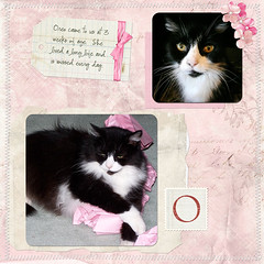 Oreo (Sunny Days) Tags: black digital cat scrapbook layout oreo load