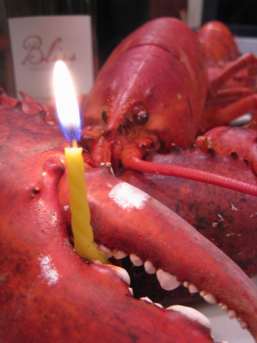 #42 - Birthday Lobster