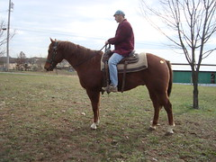 AC4H Chas- Quarter Horse (Another Chance for Horses) Tags: horse chestnut quarterhorse ac4hcom