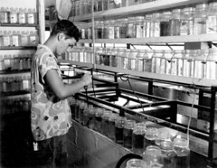 Employee works with tropical fish at a hatchery: Tampa, Florida