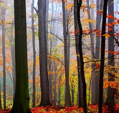 Forest Colors.... (Tobi_2008) Tags: autumn trees color nature forest germany deutschland searchthebest saxony herbst natur sachsen tobi wald farbe bume allemagne soe germania supershot abigfave colorphotoaward aplusphoto citrit ysplix amazingamateur theunforgettablepictures platinumheartaward artlegacy theperfectphotographer goldstaraward goldenheartaward novavitanewlife