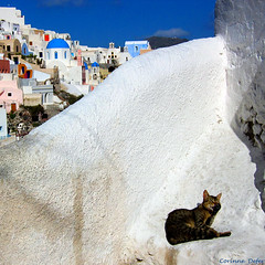 """vie de chat dans les cyclades"" (Corinne DEFER - DoubleCo) Tags: travel blue wall cat landscapes chat couleurs ile bleu santorini greece paysage mur paesaggi santorin paysages couleur oia cyclades grece paisagens landschaften landscaps defer cyclads lanscap notexture saglier carrfranais corinnedefer corinnesaglier defercorinne sagliercorinne iledesantorin updatecollection"