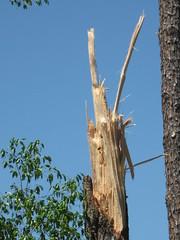Twisted wood 2