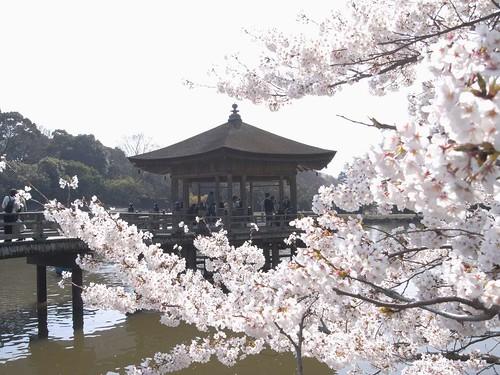 09-04-06【桜】@浮見堂(奈良公園)