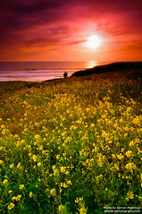 Spring @ Santa Cruz, CA (Ayman Aljammaz) Tags: ocean california trip travel light sunset sea usa seascape flower nature water beautiful clouds america canon landscape bay spring exposure natural pacific hard scenic 9 romance nd bayarea getty romantic graduate travle 1022mm hitech 1022 gettyimages  cokin blueribbonwinner gnd 3stop  40d    santacruzhiddenbeachca