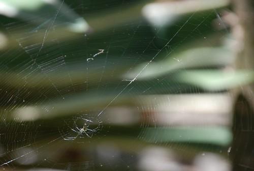 spider web in april