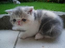 調整大小kitten137_0503221059_703922556