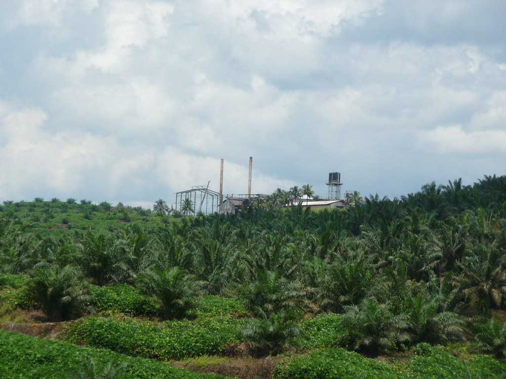 Palm Oil (5)