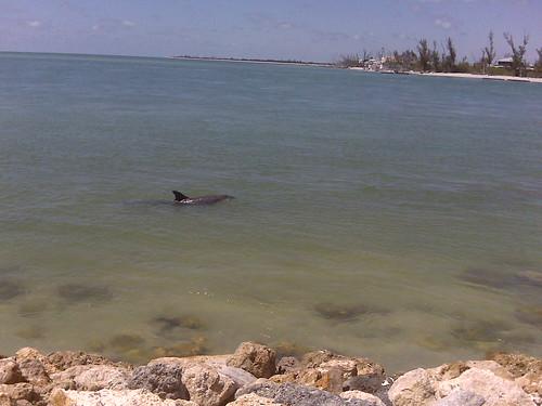 Walk with a dolphin on Captiva Island